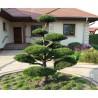 Niwaki, topiary, bonsai